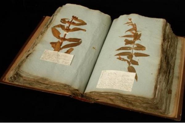gregorio a reggio book Oxford Herbarium