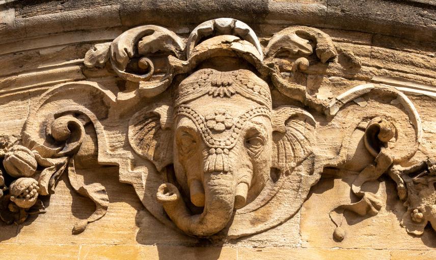 Indian Institute Elephant